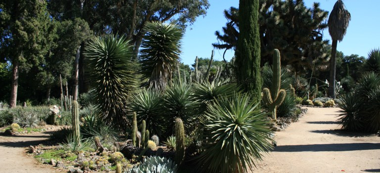 Arizona Cactus Garden in Stanford