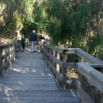Boardwalk at the Natural Bridges State Beach in Santa Cruz