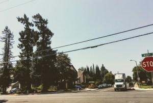 """Mr. Sunnyvale's"" plants"