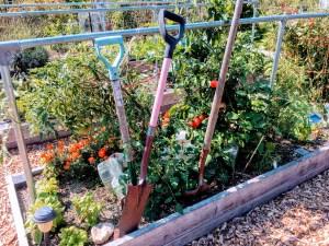 Community garden in Palo Alto