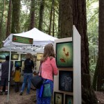Woman looking at pictures at the Kings Mountain Art Fair, Woodside