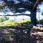 Tree swings at Albany Bulb.