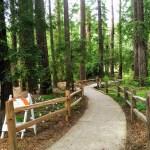 Walkway through the grove, Los Altos.