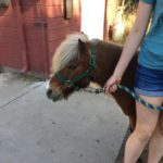 A pony at the 4-H Cupertino