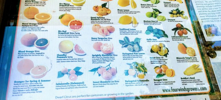 Citrus for all seasons, descriptive poster at Quarry Lakes, Fremont
