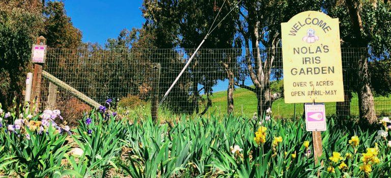 Entrance of Nola's Iris Garden, San Jose.