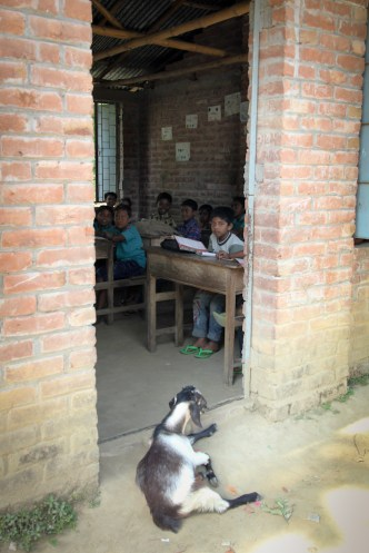 Outside the classroom. Even the goat wants to learn!