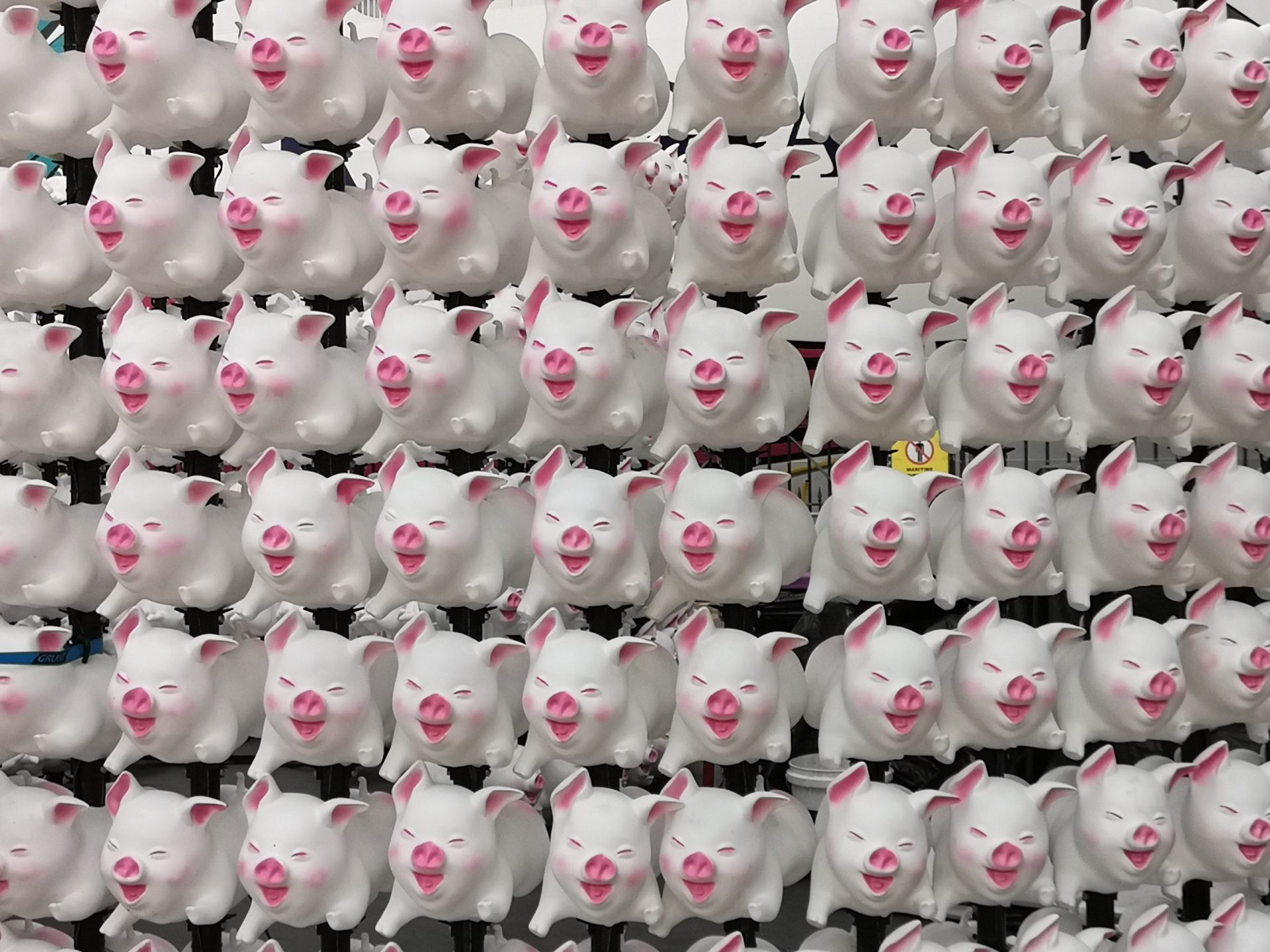 Sydney Chinese New Year 2019 cute pigs sculpture