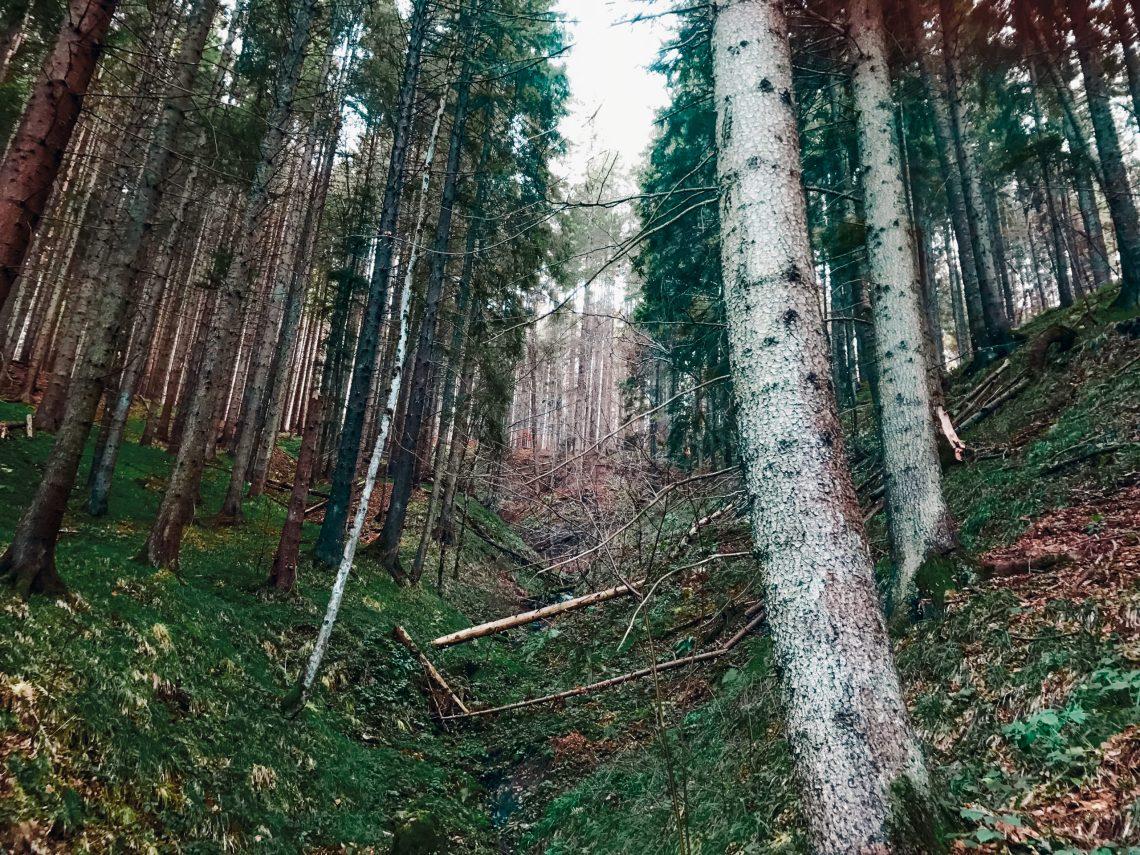 Wald in Transsilvanien auf dem Rumänien Roadtrip