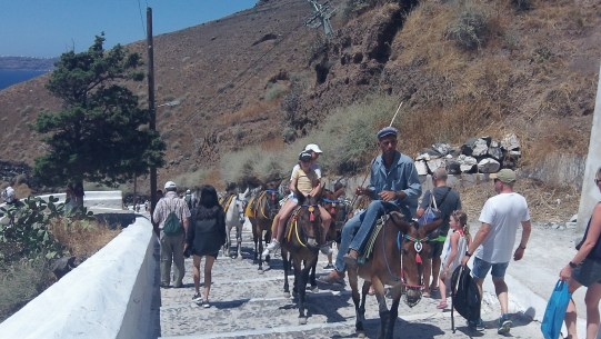 You must share the descending road with mules