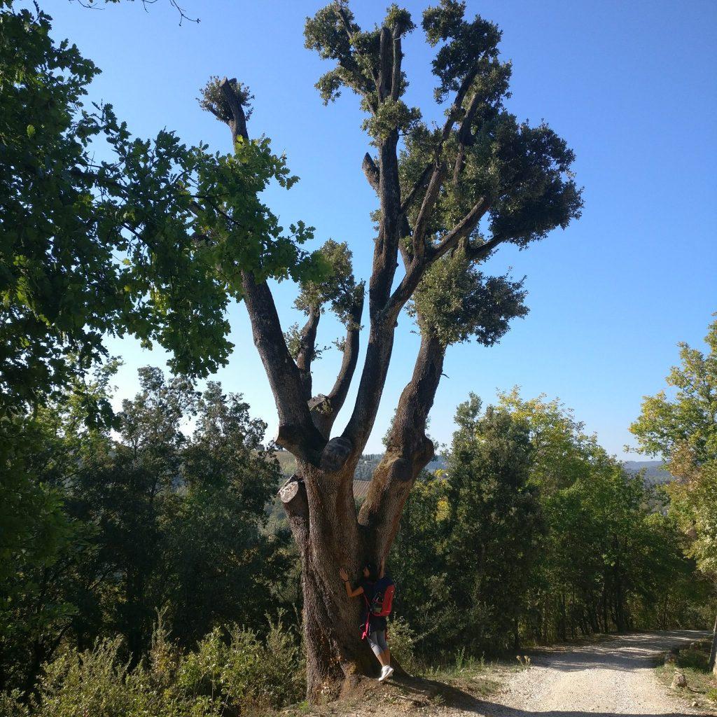 via-francigena-alberi