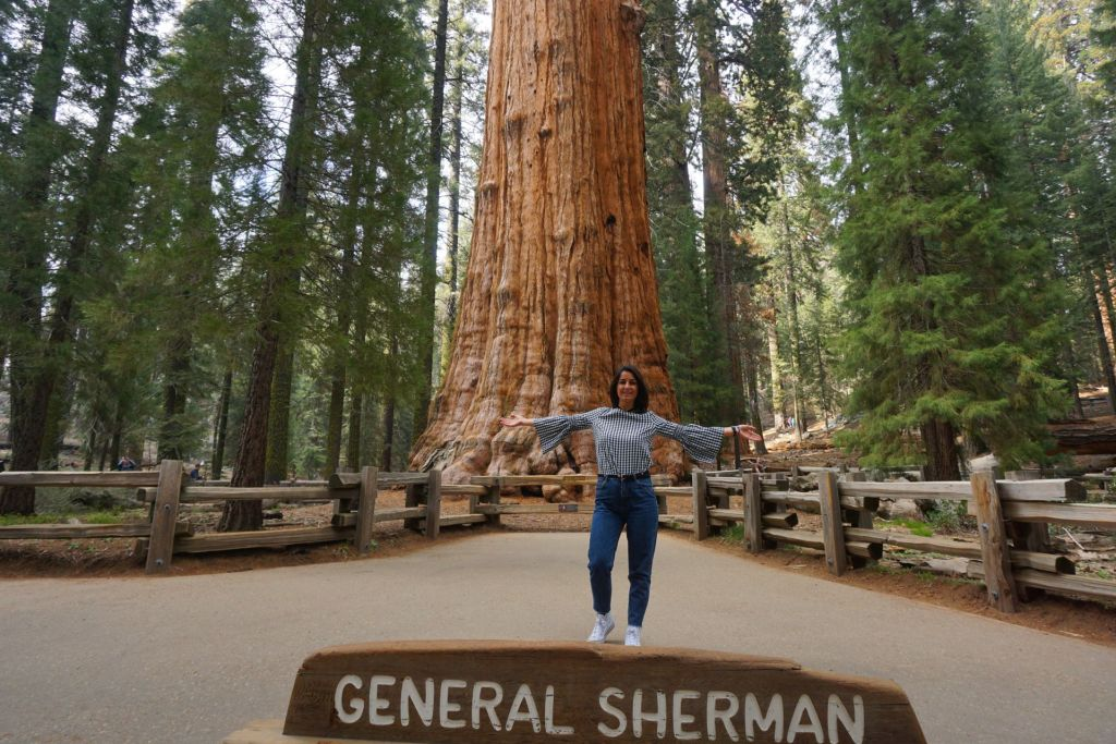 sequoia-general-sherman-tree