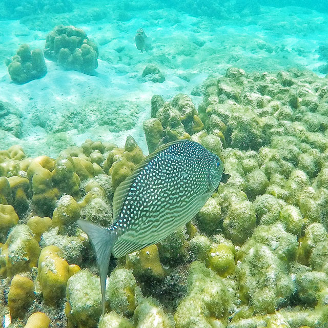 Barriera corallina Koh Lipe