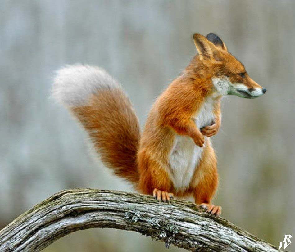 Fox-squirrel by Dwarf-hybrids