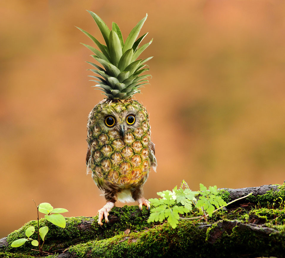 A baby pineapple owl by Felfriast