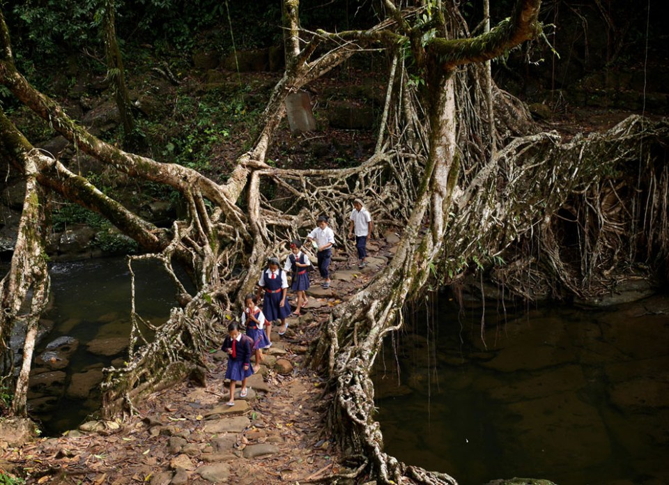 "In a scene played out every weekday morning, students of the RCLP School in Nongsohphan Village, Meghalaya, India, cross a bridge grown from the roots of a rubber tree. In the relentless damp of Meghalaya's jungles, wooden structures rot away too quickly to be practical. For centuries the Khasi people have instead used the trainable roots of rubber trees to ""grow"" bridges over the region's rivers. (© Amos Chapple)"