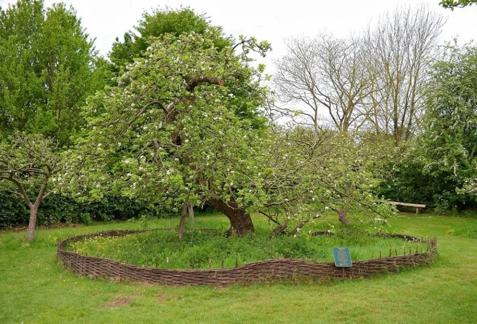Isaac Newton's apple tree near Grantham, Lincolnshire - Unusual Places