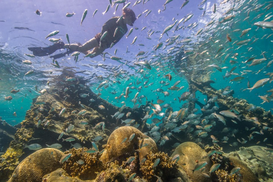 Diving in the clear water of the Florida Keys