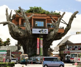 """Naha's Treehouse Restaurant This restaurant is a landmark located on Highway 58 at the entrance to Onoyama Park. Over the years, it has changed names several times. In its present incarnation, its name is """"gajumaru"""", the Okinawan word for the banyan tree. Very appropriate given its location atop a giant banyan."""