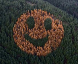smiley face forest