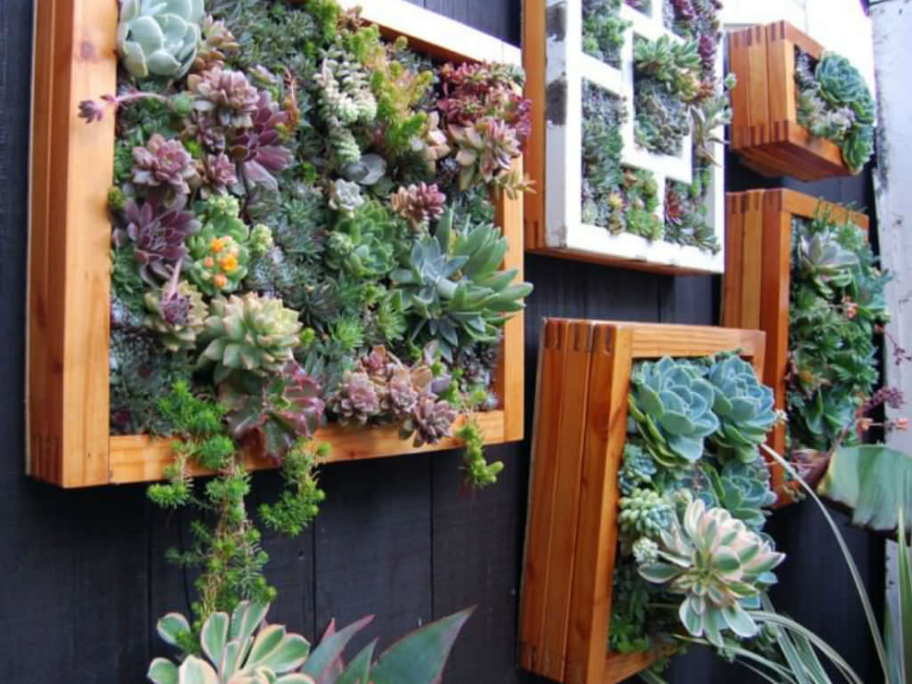 Vertical Succulent Garden In A Few Easy Steps Unusualseeds