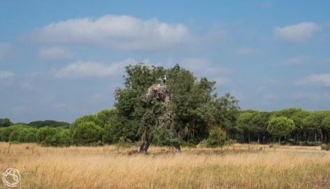 Doñana Huelva