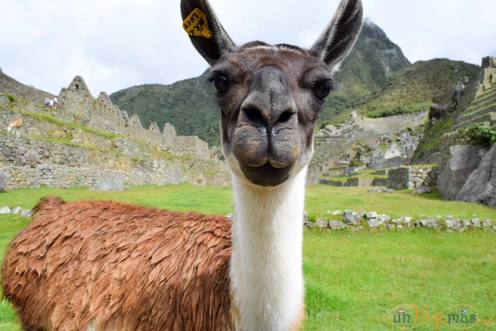 Resumen de la Ruta de 9 días por Perú