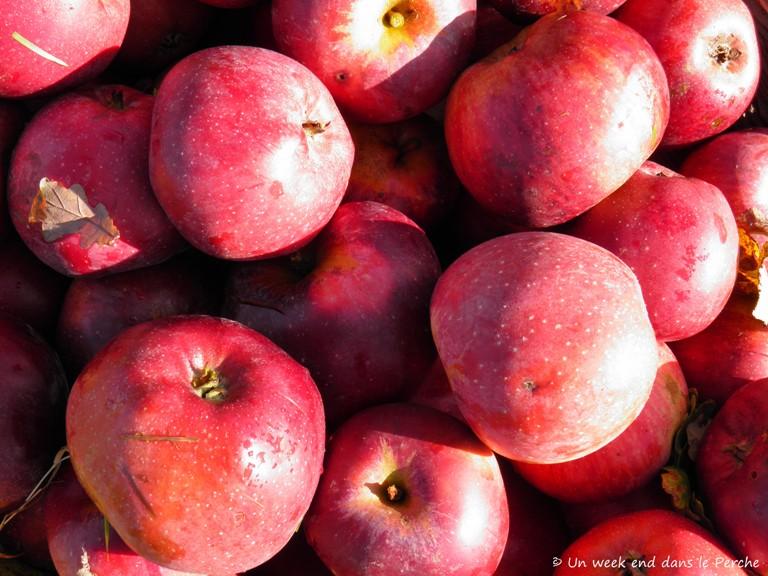 Pommes Calville du Perche