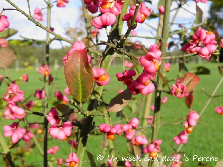 Un week end dans le Perche : couleurs d'automne