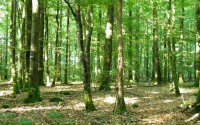 Courir dans le Perche : La Forestière Senonches
