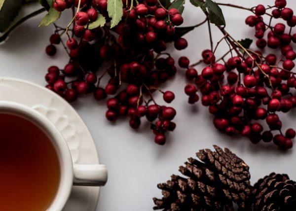 Best Rooibos Tea Brand