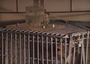 Monkey in a cage with a treat-dispensing device.