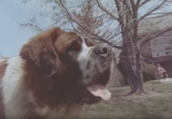 A hungover Saint Bernard is used as a teaching tool in Route One.