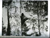 Black Bear, Yellowstone. 377-C-WT-8