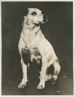 """Original Caption: """"Igloo"""" Admiral Byrd's dog, which has been to both ends of the Earth. Local identifier: XEJD-DE-02-02-11"""
