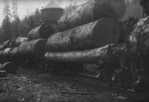 Lumber Production 2