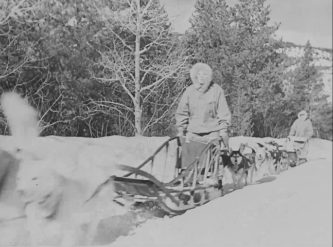 A man transports films with a dog sled. There are trees in the background and snow on the ground.