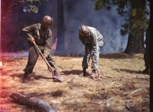 342-C-K3722 NAID: 148728130 Original Caption: Operation Firefly - Negro paratroopers of the 555th Parachute Infantry prepare a clearing to keep the forest fire from spreading. Umatilla National Forest, Oregon.