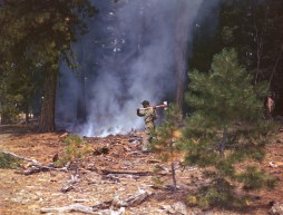 342-C-K3729 NAID: 148728142 Original Caption: Operation Firefly - A paratrooper of the 55th Parachute Infantry splits smoldering wood - finishing up touches in fighting a forest fire. Umatilla National Forest near Pendleton, Oregon.