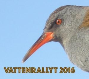 vattenrallyt-2016-logga