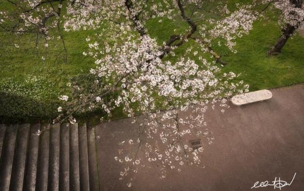 Foto di Pietro Modena [✿ 桜 Sakura Reporter]