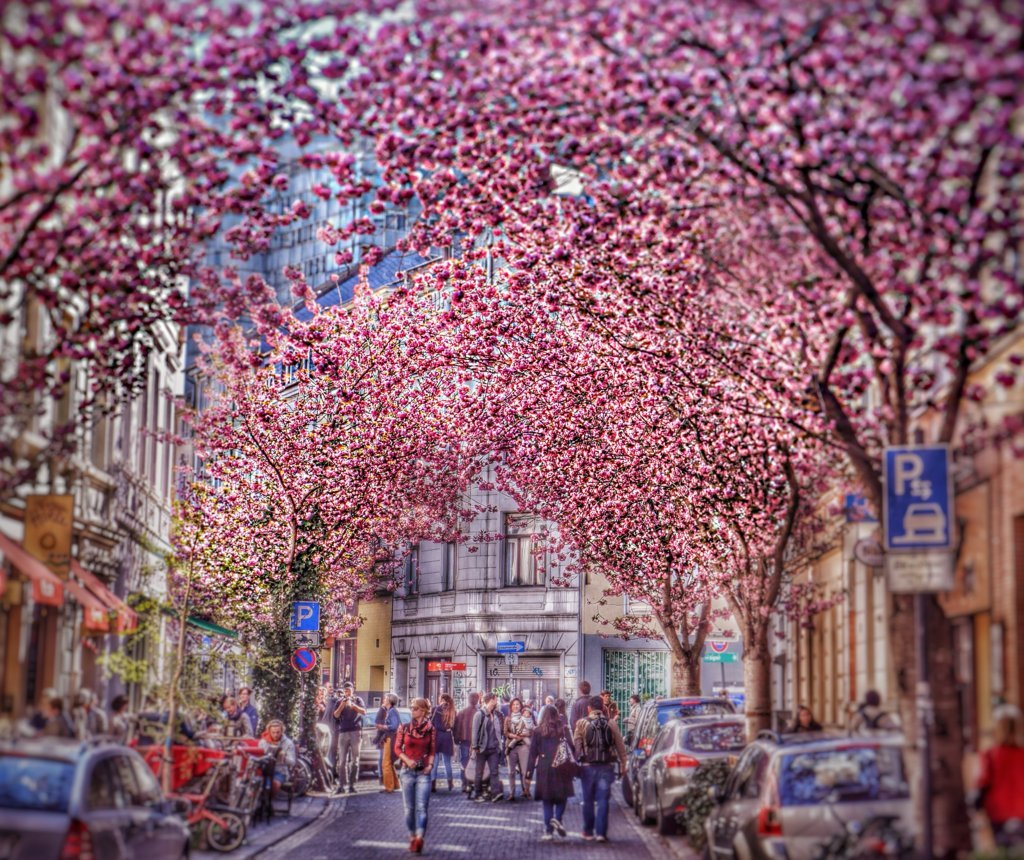 Blooming_Bonn (FILEminimizer)