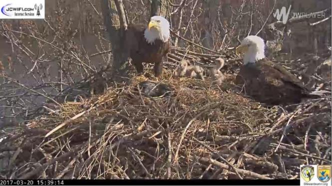 Nbg Eagles Third Egg 15