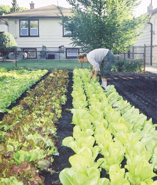 SPIN Farming: Why you would be wise to trade in your lawn for an urban garden
