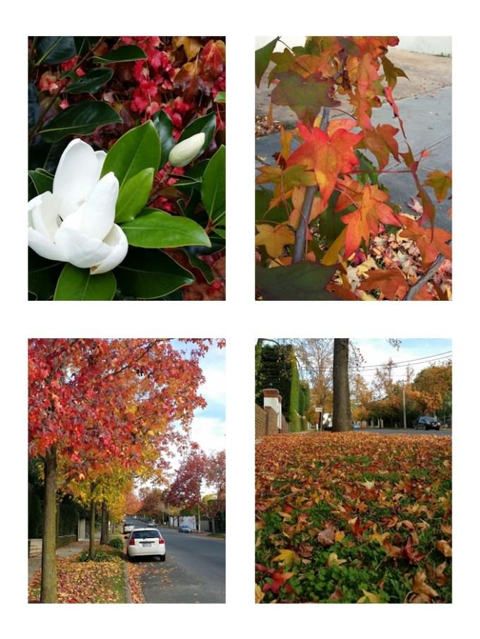 Outono em Melbourne