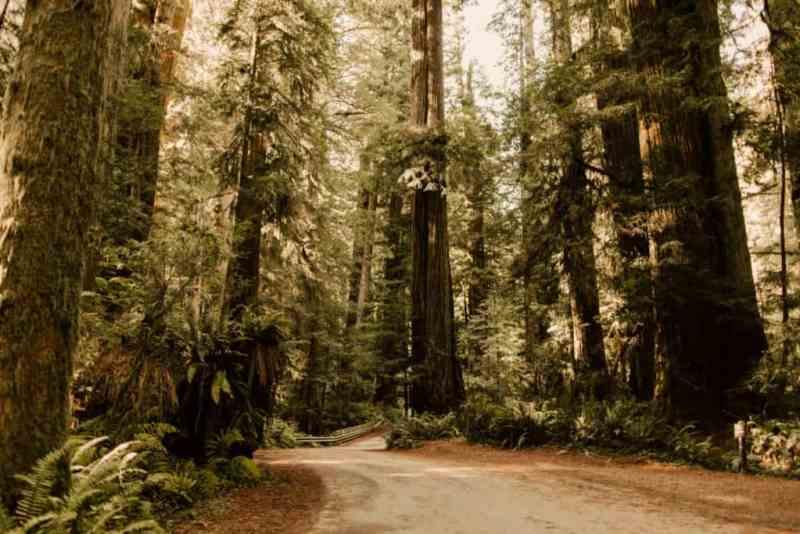 redwood national park lodging