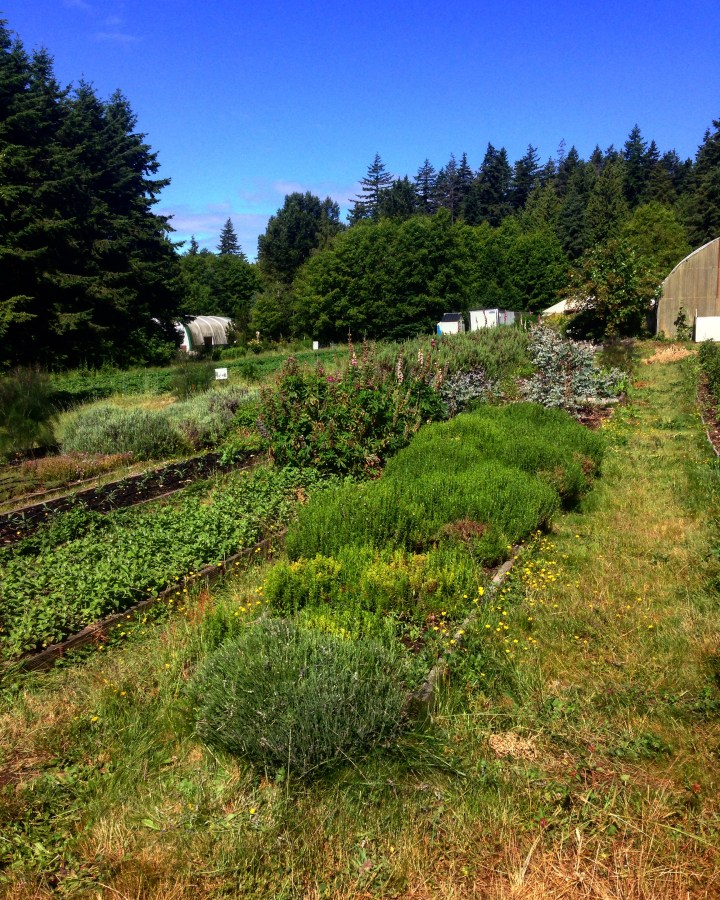A photo of the organic farm at UBC