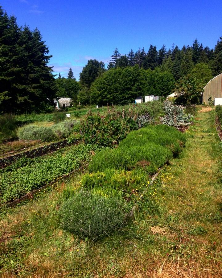 A photo of the organic farm at UBC