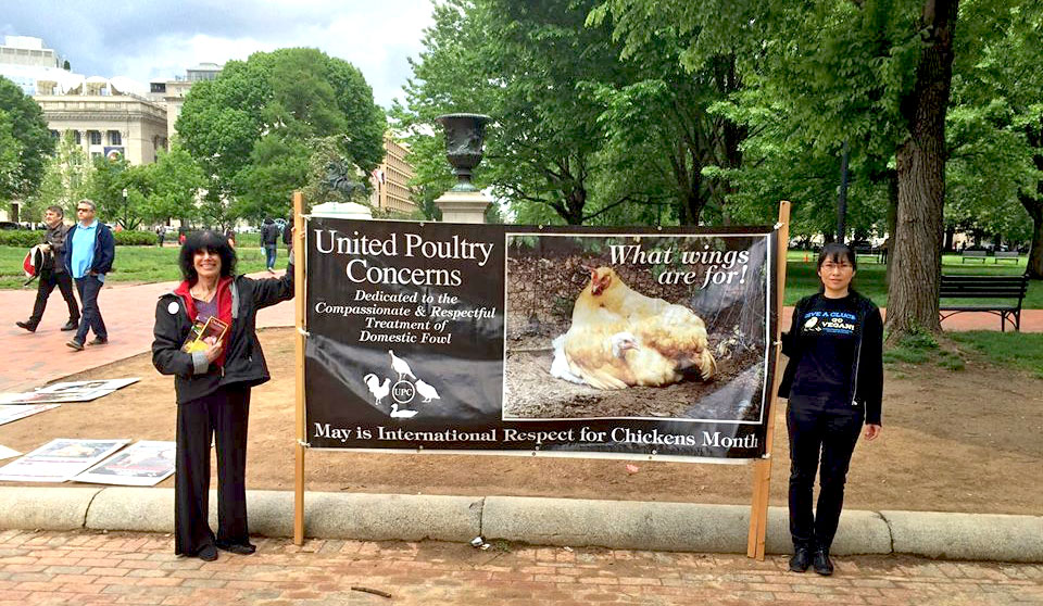 Karen and Liqin holding a 'International Respect for Chickens Month' banner by the White House.