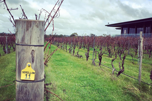 Margaret River wine tour